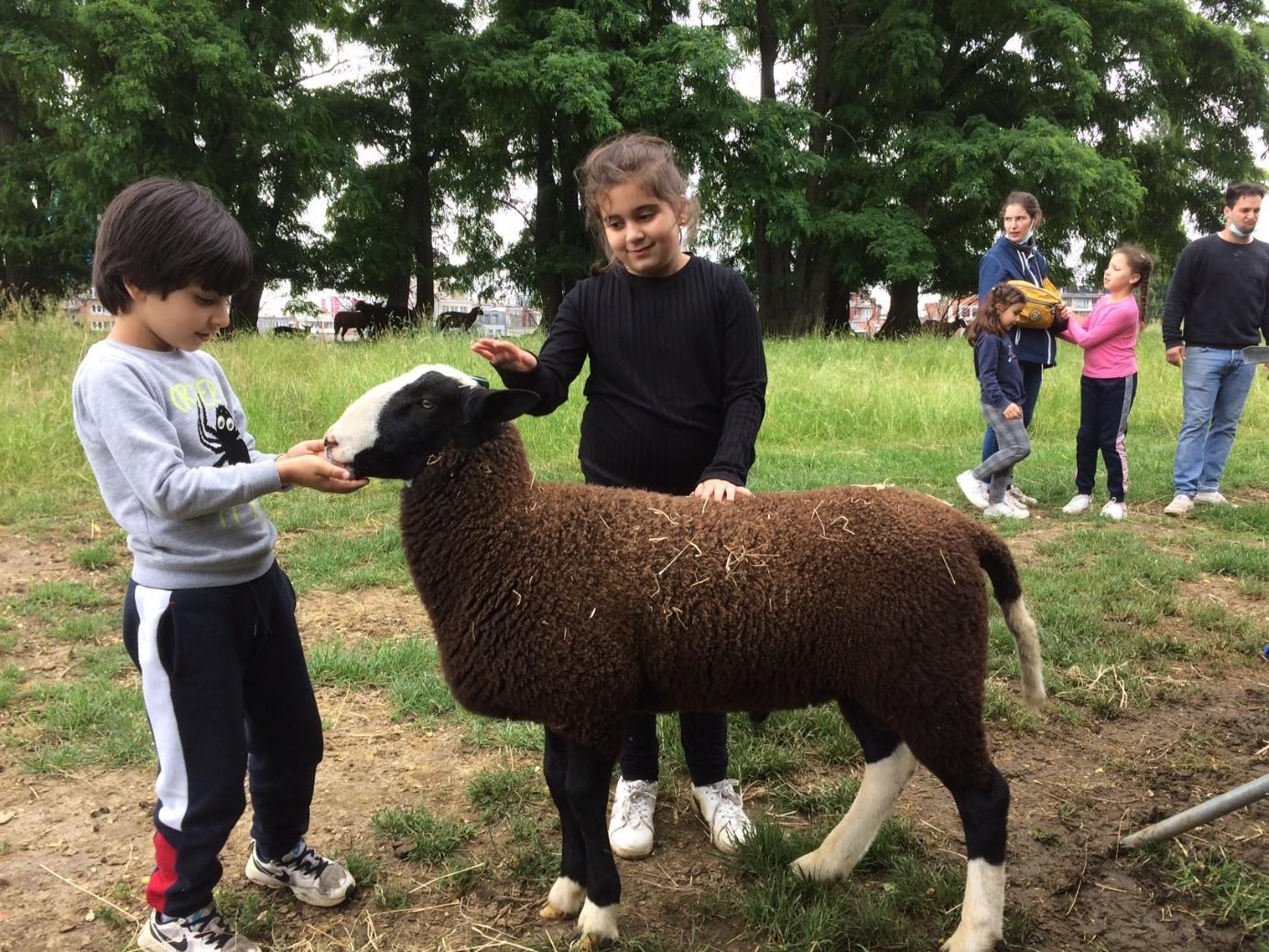 À la rencontre des moutons